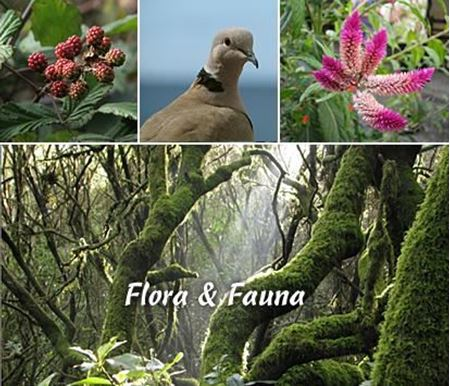 Picture for category Flaura & Fauna